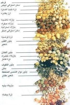 أهم الفيتامينات اللازمة لتغذية الحمام