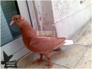 صور حمام شامي حلبي مصري