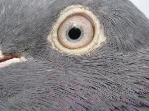 علاج مرض العين الواحدة بالحمام