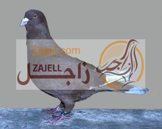 مواصفات الحمام اللبناني