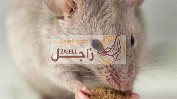 كيفية التخلص والقضاء على الفئران