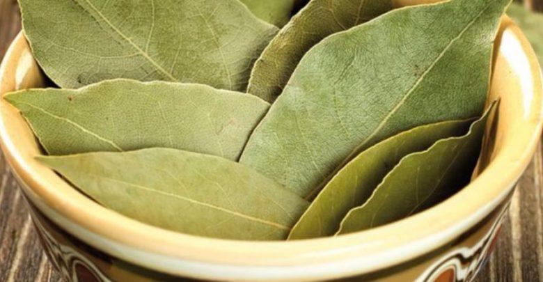 فوائد ورق الجوافة لعلاج الحمام من مختلف الأمراض