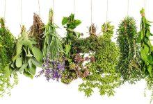 Photo of اسهل علاج لمرض السالمونيلا بالأعشاب الطبيعية بتكلفة بسيطة