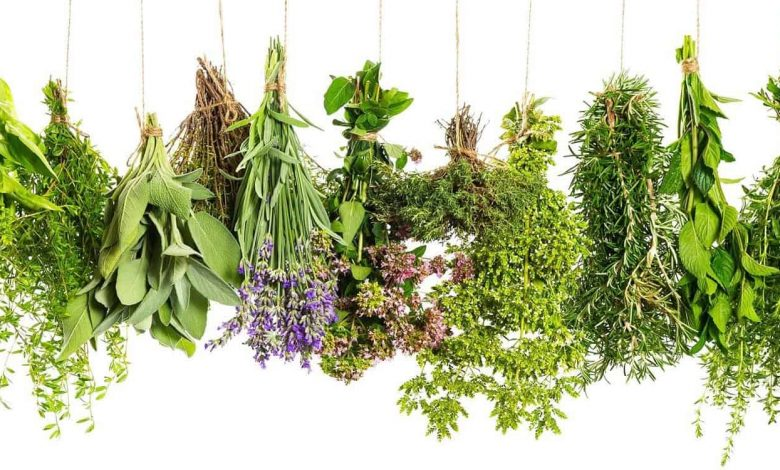 أسهل طريقة لعلاج السالمونيلا بالأعشاب الطبيعية بأقل التكاليف