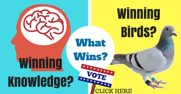 Winning Racing Pigeons or Winning Knowledge